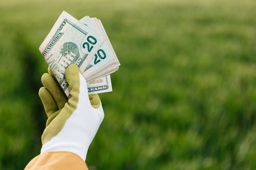 Crop anonymous gardener in gloves showing American paper money with number twenty and photo of building on blurred background with green field in daylight