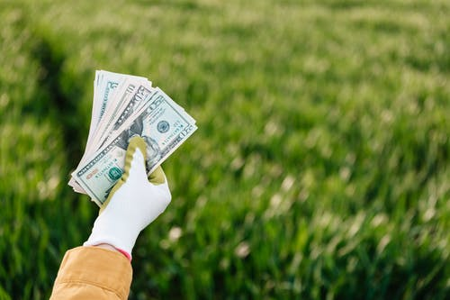 Crop anonymous gardener showing different dollar banknotes on grass background