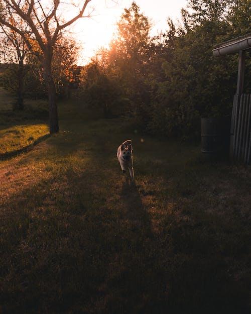 คลังภาพถ่ายฟรี ของ การวิ่ง, ดวงอาทิตย์, ต้นไม้