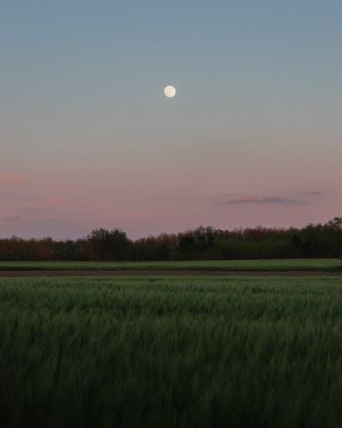 คลังภาพถ่ายฟรี ของ จันทรา, ดวงจันทร์, พระจันทร์