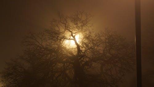 Free stock photo of creepy, fog, light