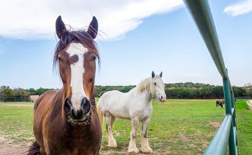 Free stock photo of animals, farm, field