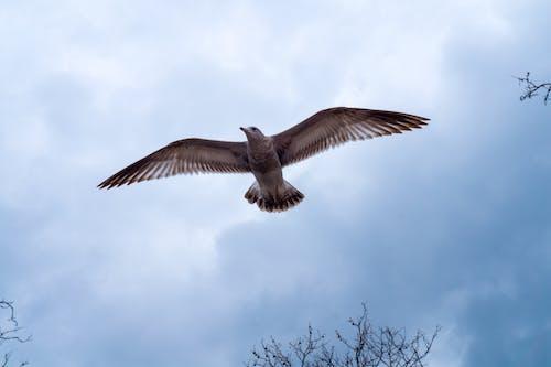 Free stock photo of bird, day, flying