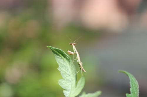 Free stock photo of alone, insect, leaf