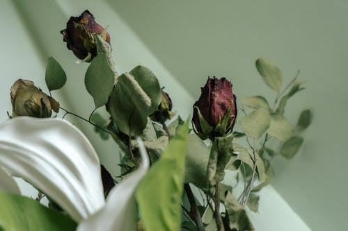 Dried roses with green leaves in bunch