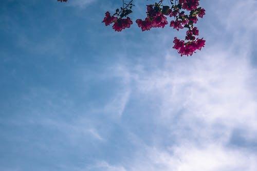Fotos de stock gratuitas de amable, ángulo bajo, árbol