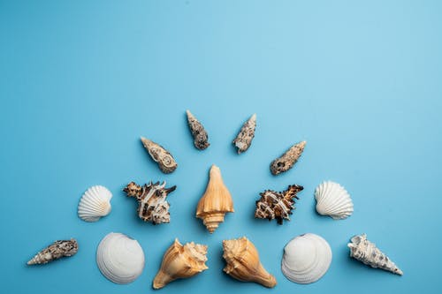 Composition of seashells on blue background