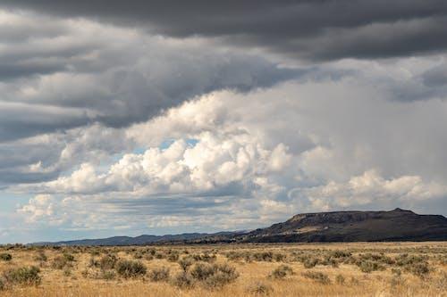 Immagine gratuita di altopiano, ambiente, arbusto