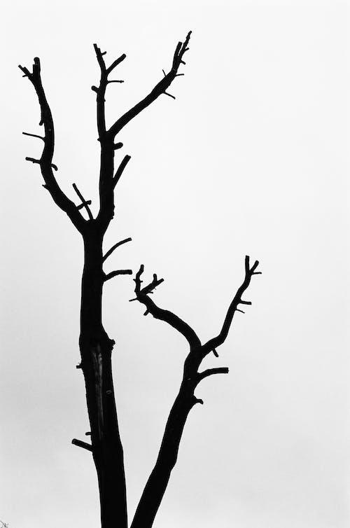 Dry tree trunk under white sky