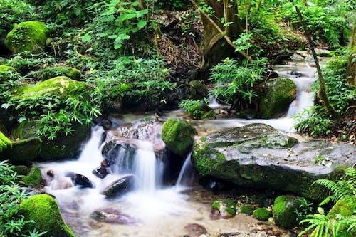 Immagine gratuita di acqua, alghe, caduta dell'acqua, cascata