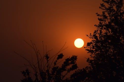 Immagine gratuita di albero, nepal, sole, tramonto