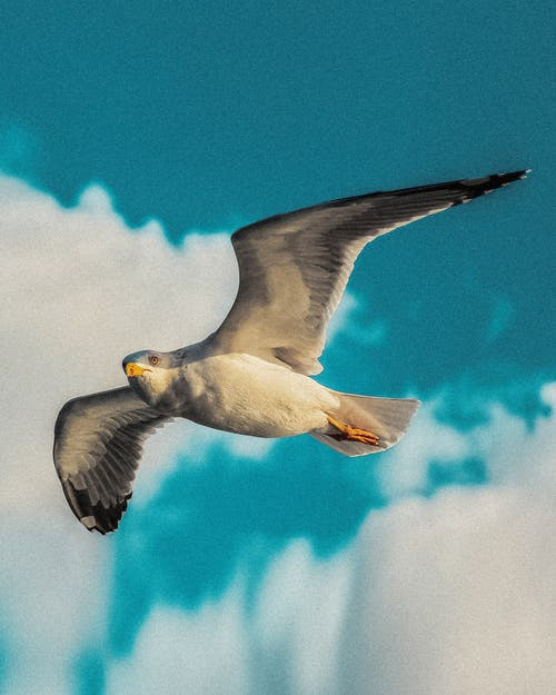 คลังภาพถ่ายฟรี ของ bulutlu gökyüzü, deniz hayvanı, hayvan, kus