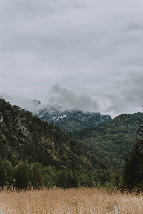 Gratis lagerfoto af bakke, bjerg, dis, efterår