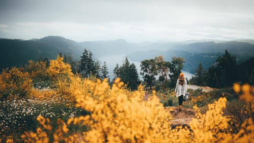 Woman in White Long Sleeve Shirt Standing on Yellow Flower Field