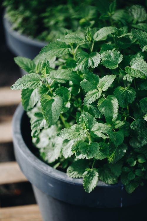 Green Plant on Black Pot