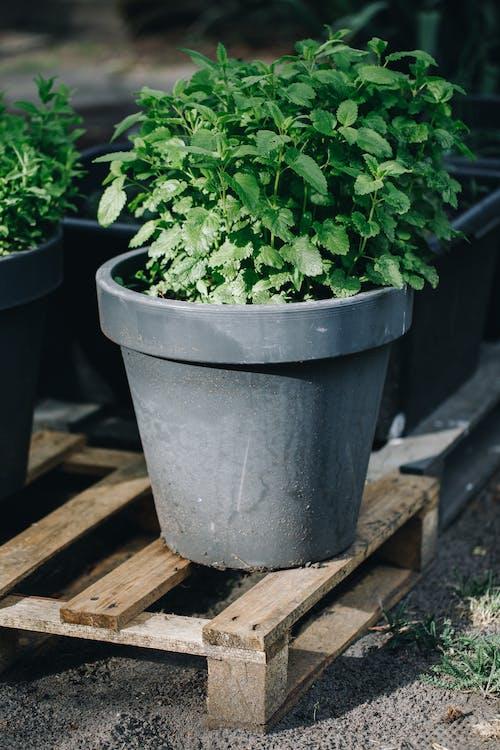 Green Plant on Gray Clay Pot