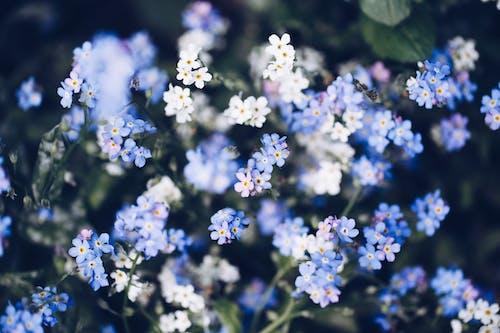 White and Blue Flowers in Tilt Shift Lens
