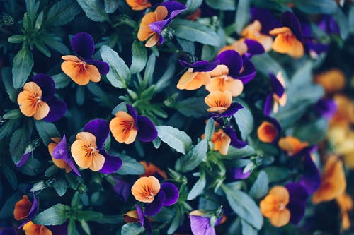 Purple and Yellow Flowers in Tilt Shift Lens