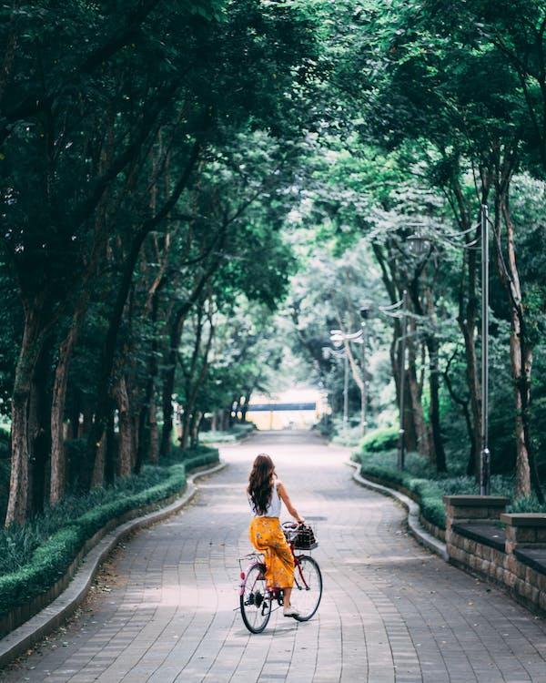 Immagine gratuita di alberi verdi, andare in bicicletta, baldacchino di albero