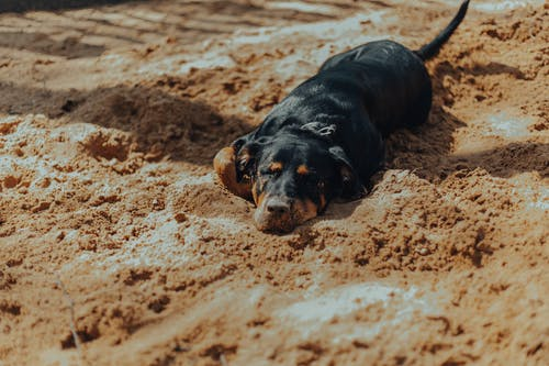 Purebred dog lying on sandy ground