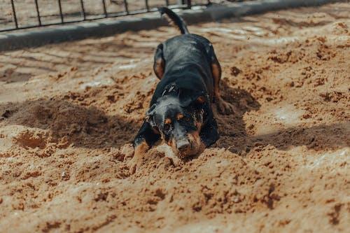 Cute dog lying near fence in sunlight