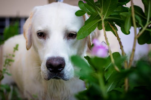 Free stock photo of dog, pet