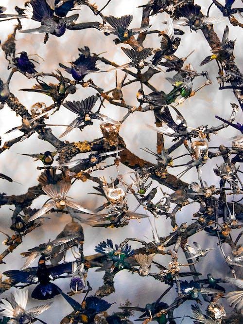 Δωρεάν στοκ φωτογραφιών με καναρίνι, καταιγίδα, κοπάδι, πουλιά