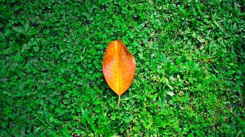 オレンジの葉, グリーン壁紙, 明るい緑色, 明るい色の無料の写真素材