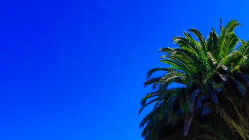 パルム, ヤシの木, ヤシの葉, 晴天の無料の写真素材