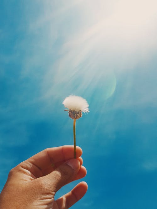 Ảnh lưu trữ miễn phí về ánh sáng mặt trời, bầu trời, Bồ Đào Nha, cảm hứng