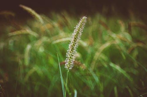 Základová fotografie zdarma na téma fotografie, fotografie přírody, hnědá tráva, přírodní krajina