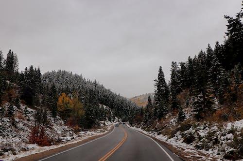 Asphalt road among snowy coniferous forest against gray sky