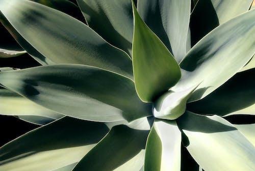 Δωρεάν στοκ φωτογραφιών με εργοστάσιο, τροπικά φύλλα, τροπικός, φύλλα