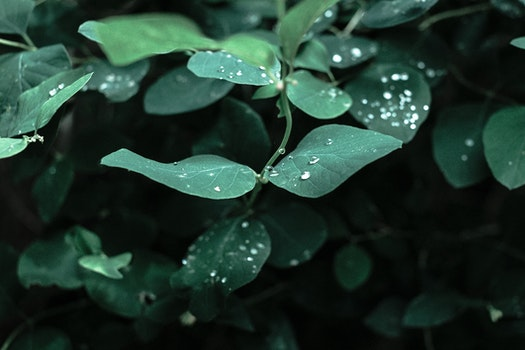 Free stock photo of nature, water, leaf, leaves