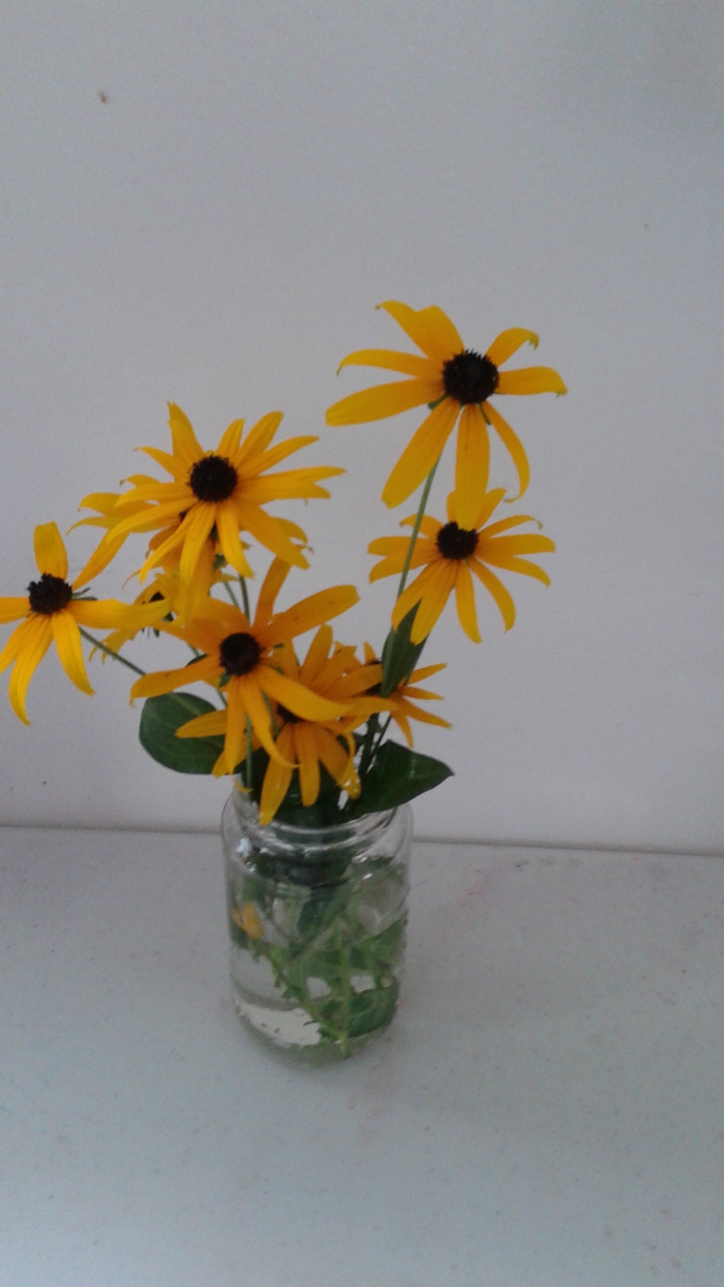 Free stock photo of Yellow Sunsine