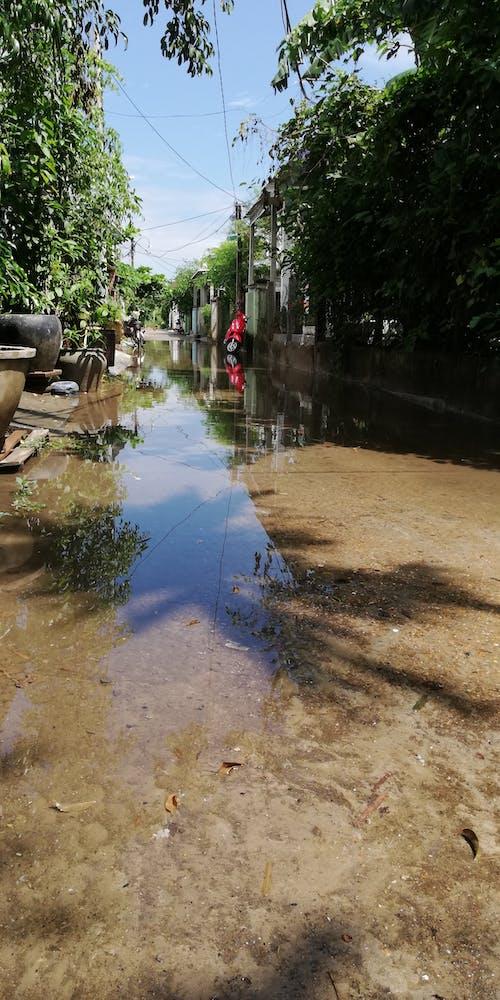 Free stock photo of alley, green, motorbike, rain