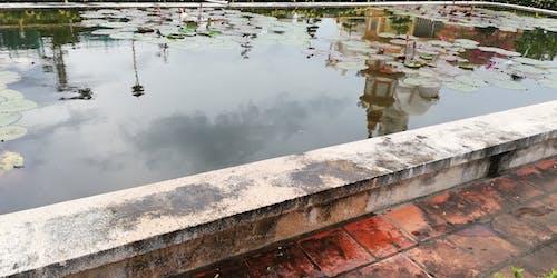 Free stock photo of lotus, reflection, water