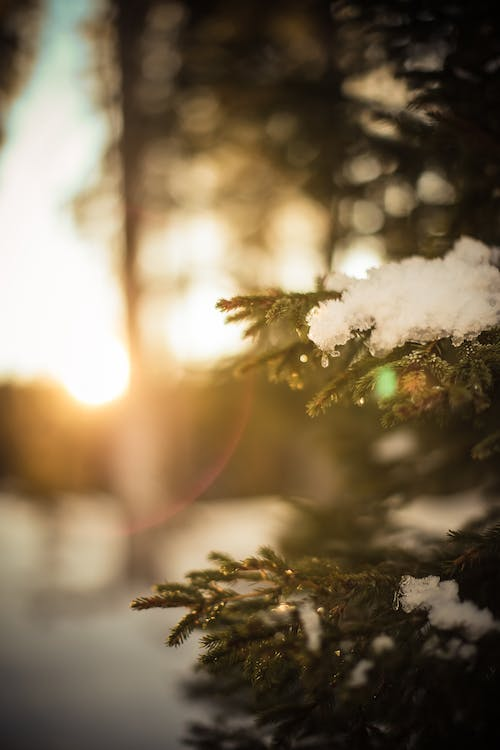Free stock photo of apricity, cold, forest