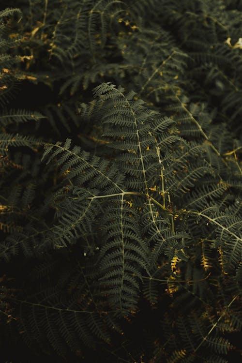 Green leaf blades of fern