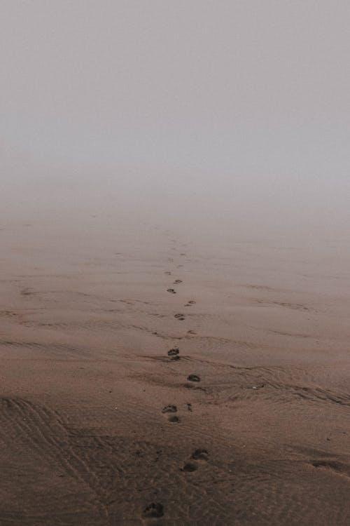 Traces on sand on beach