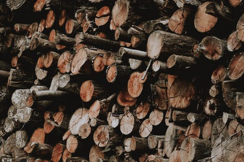 Wooden logs piled in forest