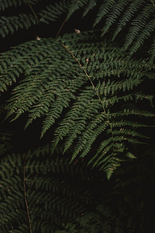 Closeup of natural fern leaf with dew growing in dark woods in summer