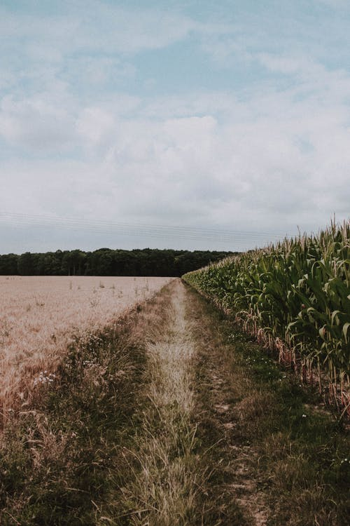 Agricultural field in countryside in summer