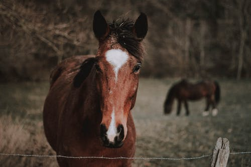 Adorable chestnut horse with white spot on head standing in paddock in countryside
