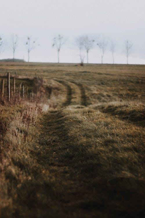 Photos gratuites de agriculture, angle élevé, arrière-plan flou
