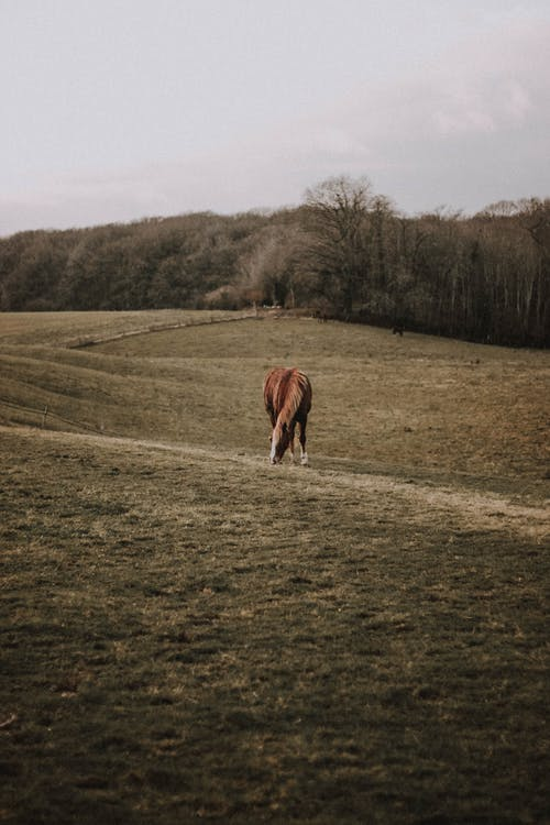 Adorable horse pasturing on meadow in rural valley