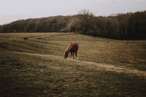 Adorable horses pasturing on dry grassy farm