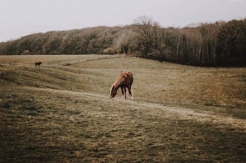 Herd of horses grazing on meadow in farm