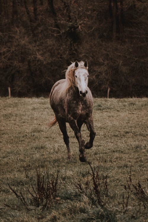 Wild horse running on meadow in countryside