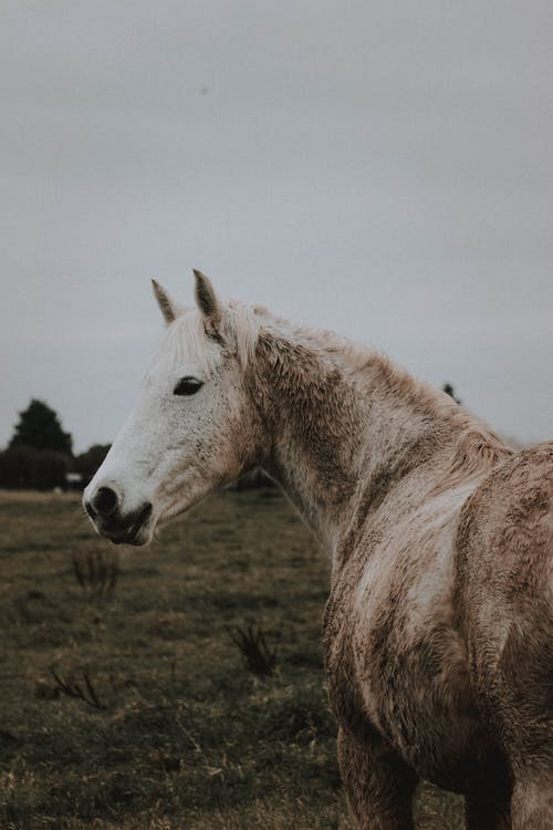 Gray purebred horse pasturing on meadow on cloudy day